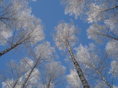Настоящая русская зима